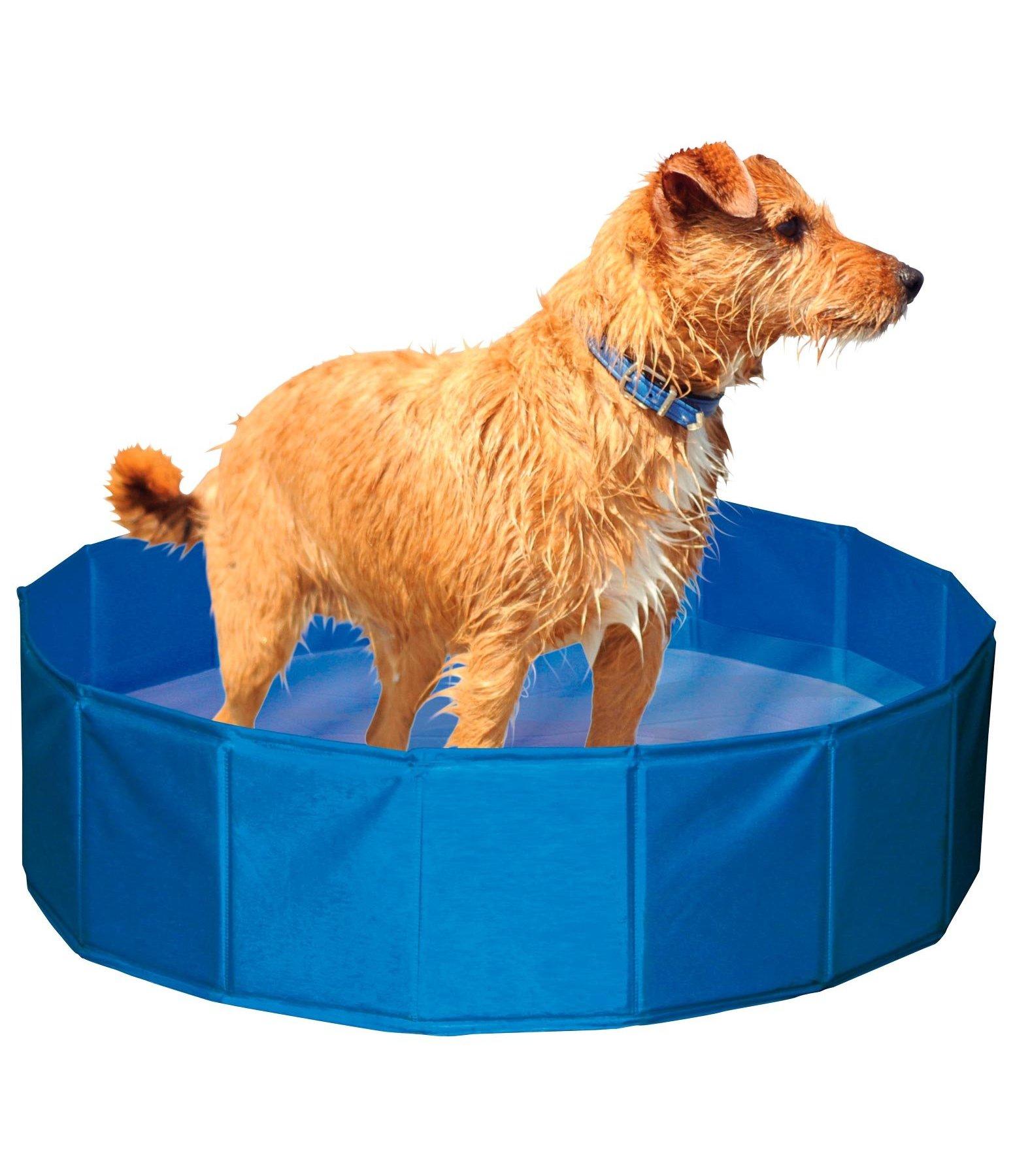 Piscine pour chien activit s jouets pour chien for Piscine pour chien