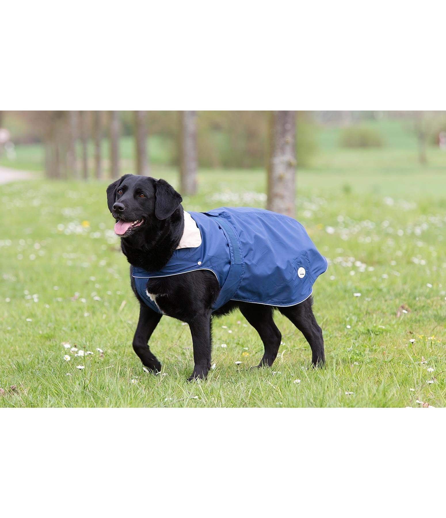 Couverture pour chiens 2 en1 couvertures chiens kramer - Couverture pour petit chien ...
