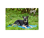 sugar dog Coussin  Cooling - 230158-S - 3