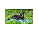 sugar dog Coussin  Cooling - 230158-S - 4