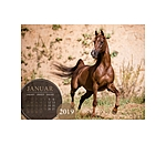 Equino Media Chevaux 2019 - 402352 - 2