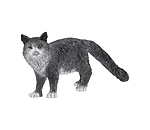 Schleich Chat Maine Coon - 660882